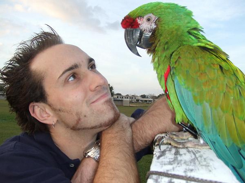 military macaw egg for sale