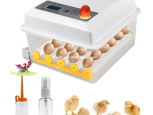 Automatic Eggs Incubator